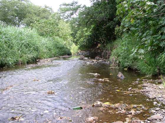 View of the stream at Waikele