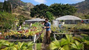 Aloha Aina O Kamilo Nui Nursery