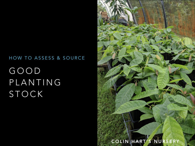 How to Grow Cacao Seedlings – Video