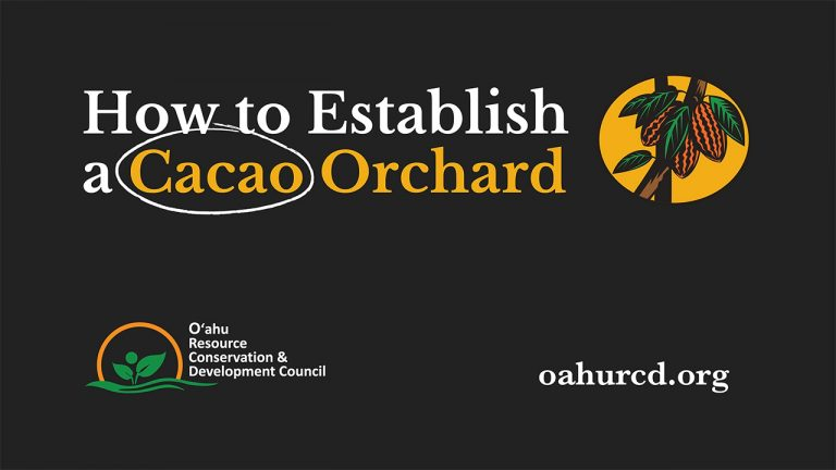 How to Establish a Cacao Orchard – Video