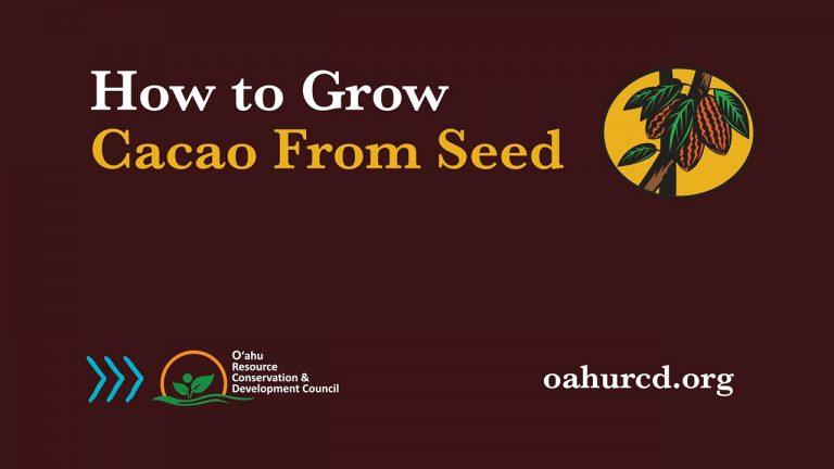 How to Grow Cacao from Seed – Video